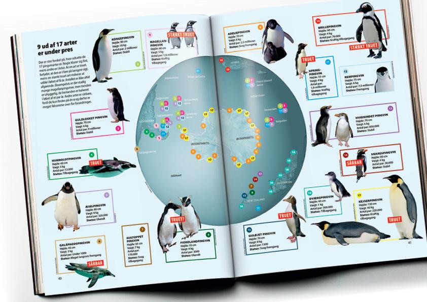 Grafik over alle 17 pingvinarter. 9 ud af 17 arter er truede. Grafikken viser levestæder og hvilke arter som er mest truede. Magasindesign: Nanna Berentzen Østergaard.