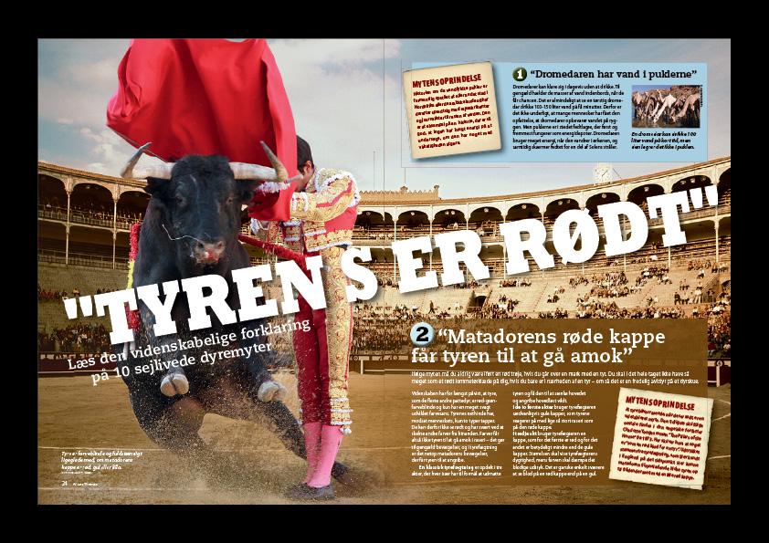 """10 myter om dyr får en videnskabelig forklaring. """"Tyren ser rødt"""" er en artikel fra Illustreret Videnskab. Magasindesign: Nanna Berentzen Østergaard"""