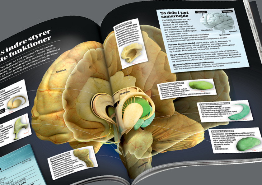 Opslag om hjernen i Videnskabens Nye Verden Dette videnskabsbogværk på 12 bind, i alt 1.548 sider(plus pilotbogen på 129 sider), har jeg været med i tilblivelsen af helt fra starten. Jeg var med i idefasen, definerede bogværkets stil med designet af de 12 forsider, lavede de første mastersider, valgte fonte, farver, stil, lavede en designmanual og et omfattende Indesignbibliotek med bogens elementer. Jeg designede pilotbogen og layoutede den færdig sammen med Louise Meyland. Pilotbogen blev udsendt til alle Illustreret Videnskabs abonnenter i Danmark gratis, som testbog. Testen gik godt, og der blev samlet et større hold, som arbejdede videre på designet og genbearbejdedebind 1. Sammen med layoutchef Anne Clemensen, layoutede og designede jeg alle 1.548 sider til løbende udgivelse i 2016-2017. Cross-border design: Alle 12 bøger er udgivet på 6 sprog. Udgaverne på dansk, norsk, svensk og finsk er lavet med sortpladeskift, dvs kun den sorte plade skiftes ved tryk for hvert sprog. Herved opnåes en betydelig økonomisk besparelse, men designet skal konstrueres på en helt særlig måde for at undgå fejl. Man kan f.eks. ikke skrive med negativ skrift på farvede baggrunde og billeder. Alle bøgerne sprog- og designtjekkes efter oversættelse og INTET må rykke sig pga sortplade-tryk-metoden.  Omslagsdesign alle 12 bind, design og koncept, pilotbogs-design: Nanna Berentzen Østergaard. Layout af pilotbog:Nanna Berentzen Østergaard og Louise Meyland. Tekst pilotbog: Torben Simonsen (redaktør), Hanne-Luise Danielsen (chefredaktør), Philip Tafdrup og Michael Von Bülow m.fl. Design og layout bind 1-12: Anne Clemensen (layoutchef) ogNanna Berentzen Østergaard. Tekst bind 1-12: Malene Breusch Hansen (redaktør), Asser Helligsøe Pelle, Jakob Mikael Espersen og Hanne-Luise Danielsen (chefredaktør).